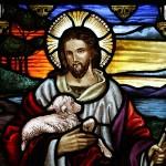 How Shepherds Smell Like Their Sheep
