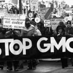 Genetic Modification: Bad for Cows and Corn, but Okay for Humans?