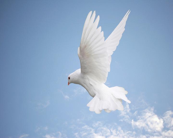 Dove Pictures Holy Spirit Blue Sky Catholic Lane