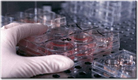 stemcellresearch